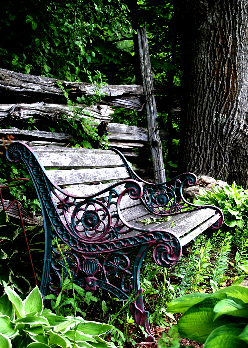 Garden Bench in the shade
